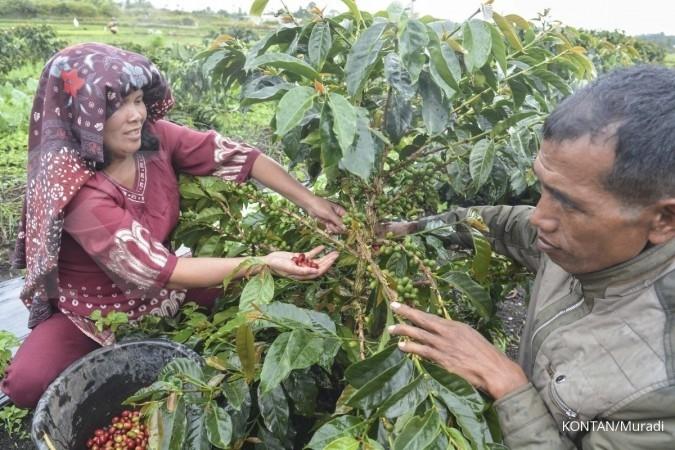 Produksi kopi 2018 diperkirakan mencapai 12 juta karung
