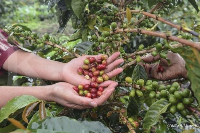 AEKI: Harga kopi lokal masih stabil