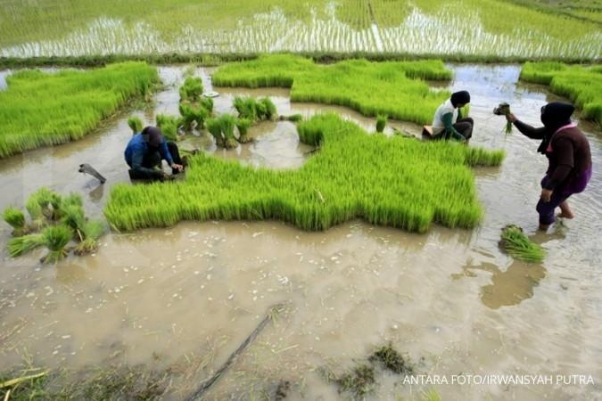 Pasokan beras di pasar tradisional masih aman