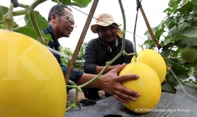 Produksi benih Ewindo meningkat 10%