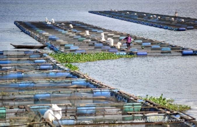 Target produksi perikanan budidaya 2018 sebesar 24,08 juta ton