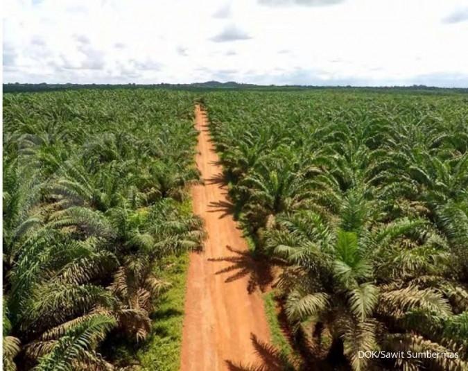 Peremajaan sawit terganjal lahan yang belum bersertifikat