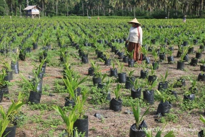 SGRO Sampoerna Agro siap sediakan benih untuk peremajaan perkebunan rakyat
