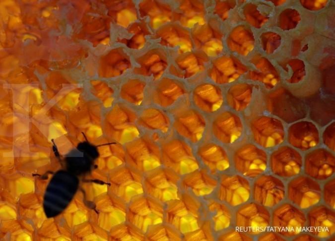Konsumsi madu bisa turunkan berat badan, berikut caranya