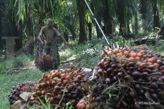 Ekspor Palm Kernel Shell Indonesia ke Jepang Terus Meningkat di Tengah Covid-19