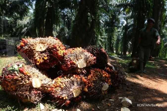 Sampoerna Agro: Penurunan harga CPO akan menekan penjualan