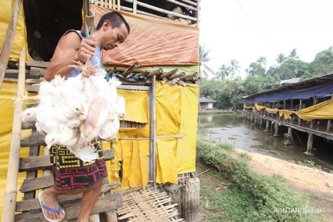 SIPD Industri ayam perlu meningkatkan nilai tambah untuk menghadapi serbuan impor