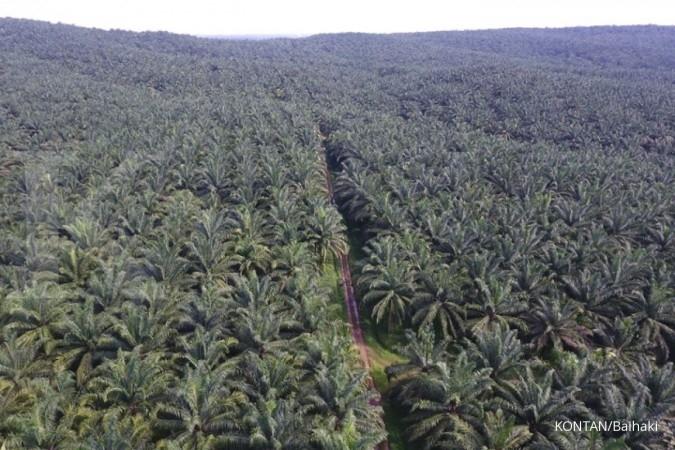 Puncak Panen Telah Lewat, Produksi Sampoerna Agro (SGRO) Bakal Melandai