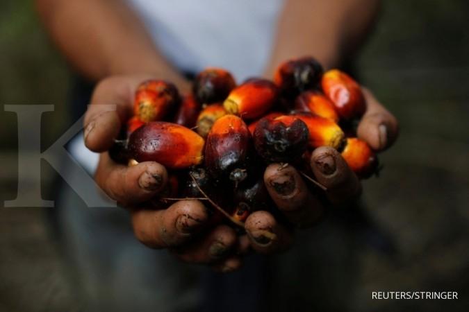 Harga CPO turun, Austindo Nusantara (ANJT) merugi di tahun lalu