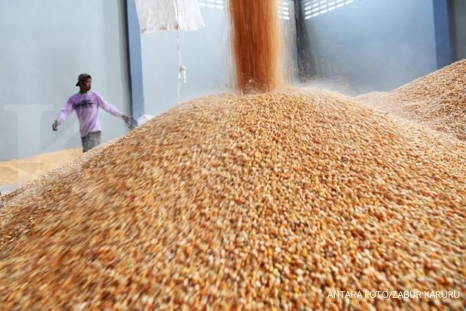 BISI Harga jagung sempat tinggi, BISI: Impor perlu ngga perlu