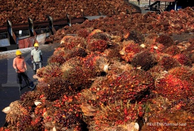 DSNG Dharma Satya (DSNG) bidik pertumbuhan produksi CPO 26%