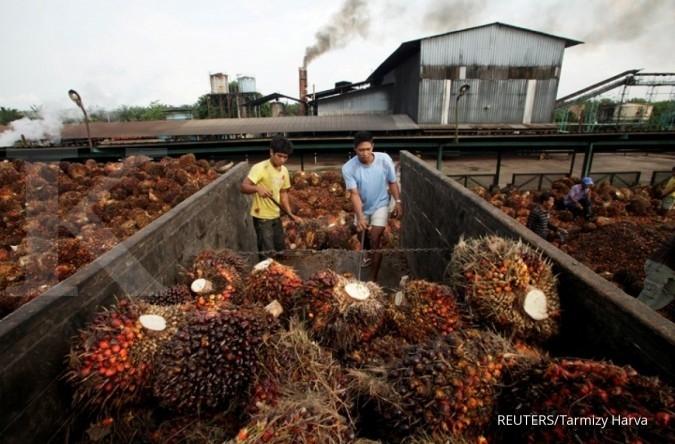 Eagle High Plantation (BWPT) Ekpansi Pabrik, Providen Agro (PALM) Pilih Efisiensi