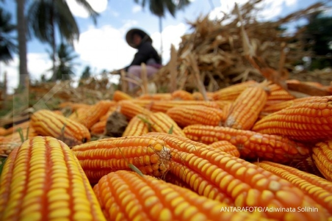 Antisipasi harga jagung, Japfa Comfeed akan bangun 10 silo