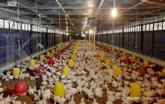 JPFA CPIN IHSG IHSG terkoreksi, cermati PER, EPS dan PBV saham emiten poultry dan ayam, Senin (5/8)