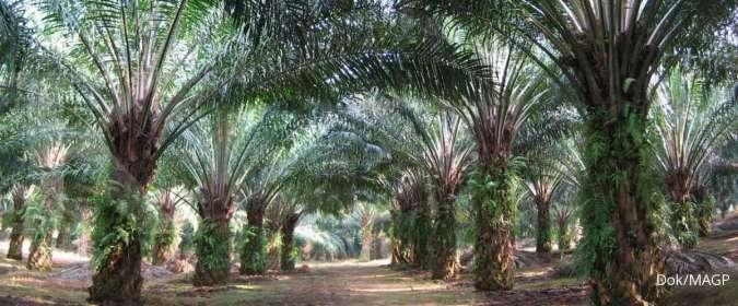 Multi Agro Gemilang Plantation (MAGP) berencana bangun PKS kapasitas 45 ton per jam