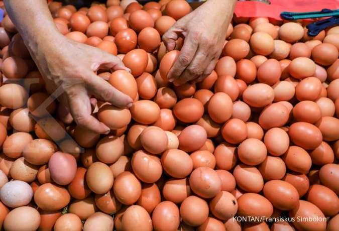 Hasil studi: Makan sebutir telur sehari tak bikin kolesterol naik