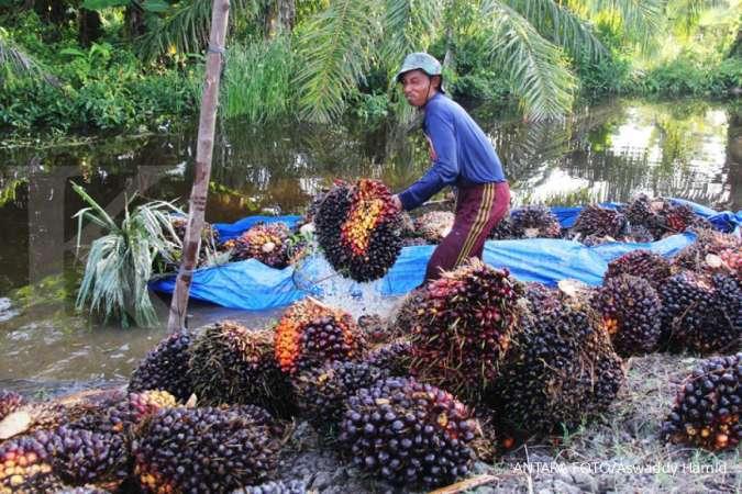 DSNG UNSP Menilik rencana kerja Dharma Satya (DSNG) dan Bakrie Sumatera (UNSP)