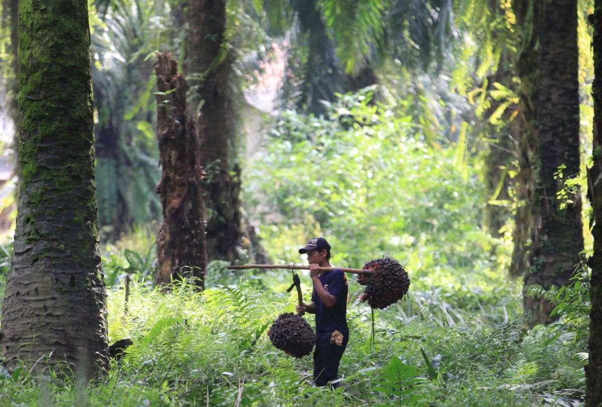 Pemerintah menaikkan tarif ekspor kelapa sawit dan CPO