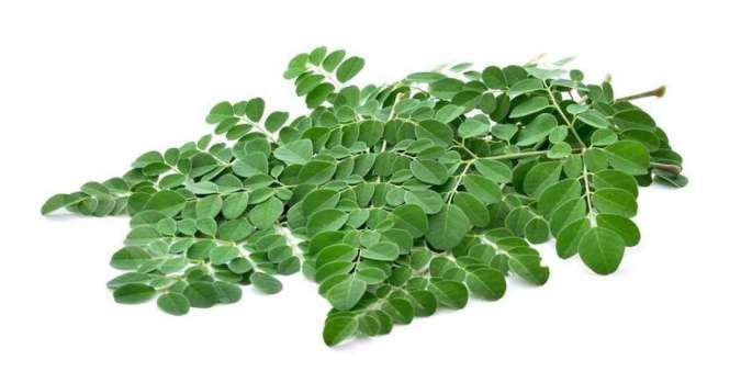 4 Manfaat daun kelor dan kandungan nutrisinya, cegah kanker dan turunkan kolesterol