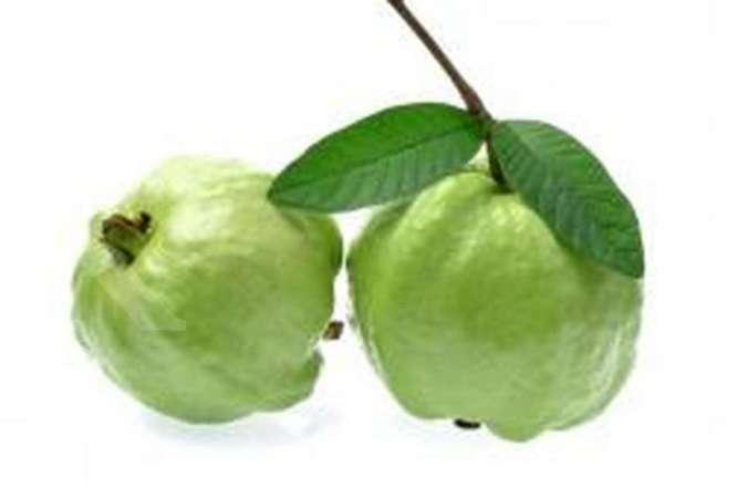 Kaya manfaat, daun dan buah jambu biji bisa mengobati ambeien sampai diabetes