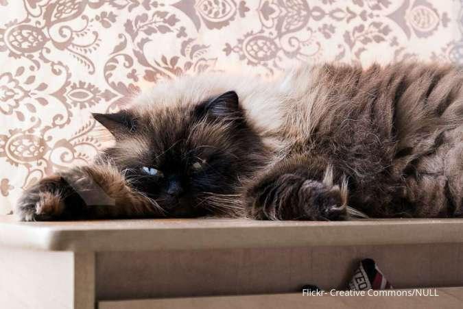 Ciri Kucing Keracunan Ini Yang Harus Dilakukan