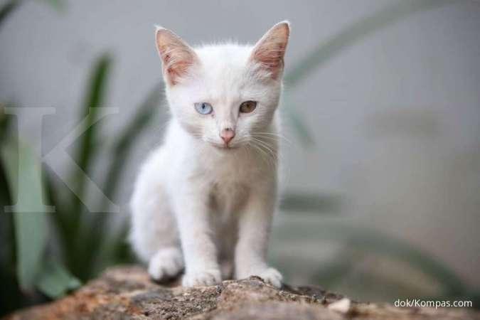 Ingin Pelihara Anak Kucing Simak Dulu Tips Merawat Anak Kucing Berikut Ini
