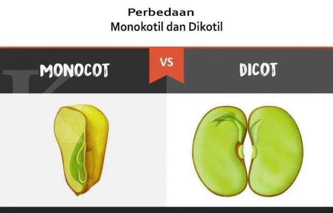 Perbedaan Tumbuhan Monokotil Dan Dikotil Dari Bunga Hingga Daun Tumbuhan