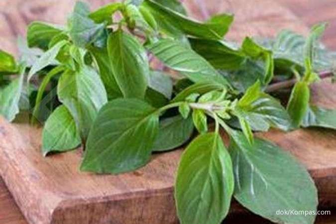 Cegah tanda penuaan, berikut 4 manfaat daun kemangi untuk kesehatan