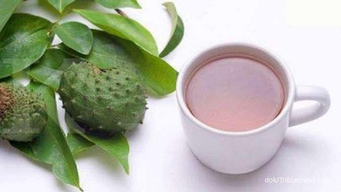 7 Manfaat daun sirsak untuk kesehatan yang belum banyak diketahui