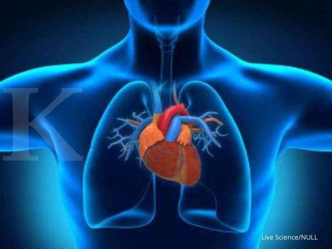 Salah satu manfaat buah delima adalah menjaga kesehatan jantung.