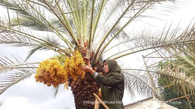 Pengunjung sedang berfoto di Wisata Kebun Kurma, Pasuruan, Jawa Timur. Dok: InstagramWisata Kebun Kurma