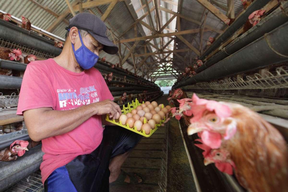Omnibus Law beri peluang peningkatan investasi di sektor peternakan