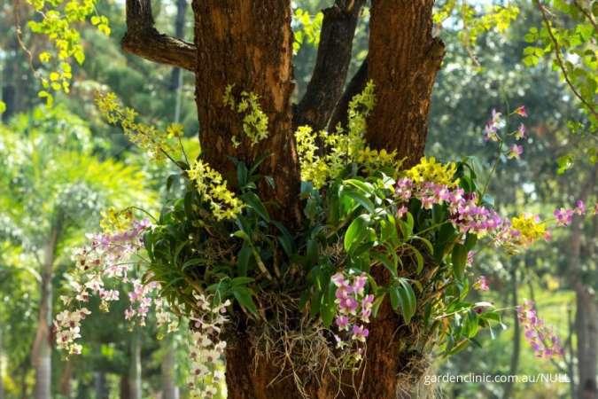 5 Cara merawat anggrek supaya tumbuh dengan indah