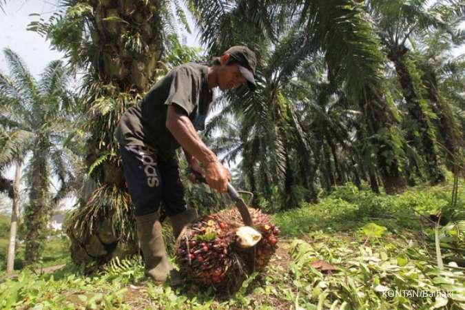 Produksi turun, Austindo Nusantara (ANJT) masih bisa raup laba di kuartal III 2020