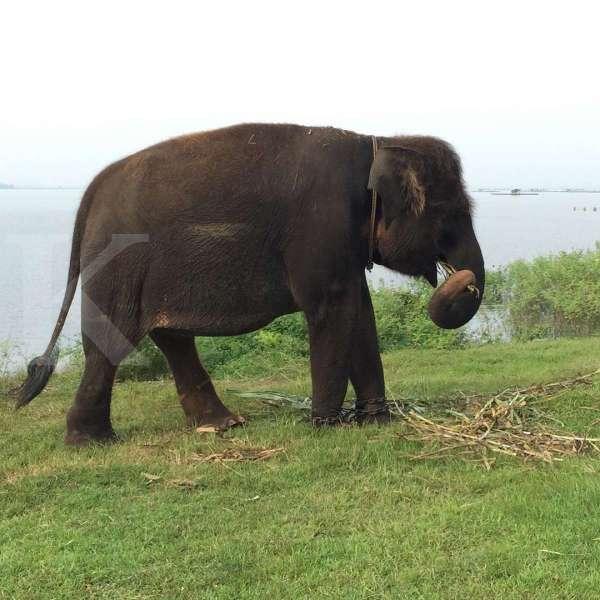 Waduk Gajah Mungkur