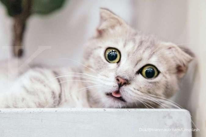 Kenali tanda kucing yang sedang mengalami stres atau depresi di rumah.