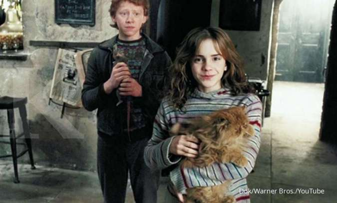Kucing lucu Crookshanks di franchise film Harry Potter.