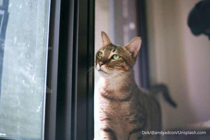 Hal-hal yang harus disiapkan sebelum memelihara kucing dan membawanya ke rumah.