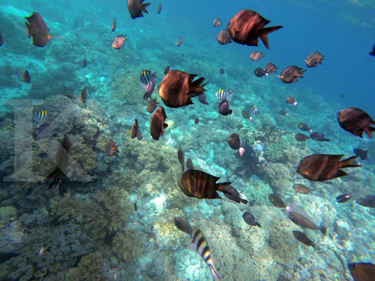 Nirwana di Bawah Perairan Wakatobi